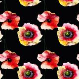 Seamless pattern with Beautiful Poppy flowers vector illustration