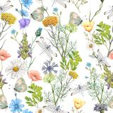 Seamless pattern of summer wildflowers. Seamless pattern of beautiful summer wildflowers royalty free stock image