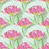 Seamless pattern with beautiful tulip flowers. Floral seamless background Stock Image