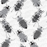 Seamless pattern with  beetles. Monochrome  hand drawn ill Stock Images