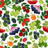 Seamless pattern with berries stock image