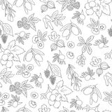 Seamless Pattern with berries. Hand drawn Seamless Pattern with berries Stock Images