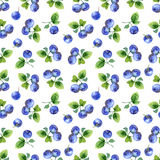 Seamless pattern with bilberry Stock Image