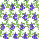 Seamless pattern with bilberry berries Stock Photos