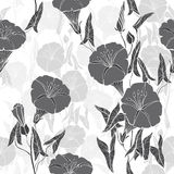 Seamless pattern with  bindweed. Monochrome  background. Royalty Free Stock Images
