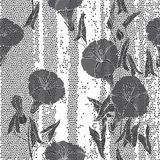 Seamless pattern with  bindweed. Monochrome  background. Stock Photography