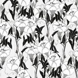 Seamless pattern with  bindweed. Monochrome  background. Royalty Free Stock Photos
