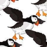 Seamless pattern Bird deadlock Australian Atlantic in flight. Ve Royalty Free Stock Images
