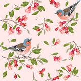 Finch branch pattern. Seamless pattern with bird on a pomegranate branch on pink background. Romantic background design for wedding, greeting card, wrapping royalty free illustration