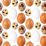 Seamless pattern of birds eggs Royalty Free Stock Photo
