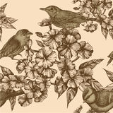 Seamless pattern with birds and flowering phloxes. Stock Photography