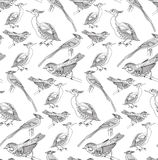 Seamless pattern with birds. Patterns can be used as background, fabric print, texture, wrapping paper, web page backdrop, wallpaper. Vector illustration Royalty Free Stock Photography