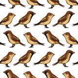 Seamless pattern with birds sparrows Royalty Free Stock Image