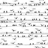 Seamless pattern of birds on wires Royalty Free Stock Photo