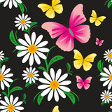 Seamless Pattern with Chamomiles and Butterflies on black  Stock Photos