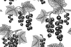 Seamless pattern with black currant. vector illustration