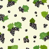 Seamless pattern with black currant berries. Vector illustration. Royalty Free Stock Photography