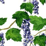 Seamless pattern with black currants Royalty Free Stock Photography