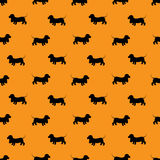 Seamless pattern with black dogs silhouettes - Dachshund on oran Royalty Free Stock Image