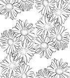 Seamless pattern black and white camomile flowers Stock Photography