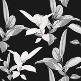 Seamless pattern, black white Ficus Elastica leaves on black background. Vector illustration Stock Photos