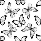 Seamless pattern with black and white menelaus blue morpho, blue morpho