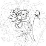 Seamless pattern  black and white.Peonies and iris Stock Photo