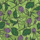 Seamless pattern with blackberries. Background. Texture. Hand drawn. Vector illustration Stock Images