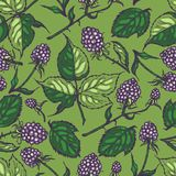 Seamless pattern with blackberries. Background. Texture. Hand drawn. Vector illustration Royalty Free Stock Photography