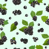 Seamless pattern with blackberry and black currant berries. Vector illustration. Royalty Free Stock Photo