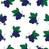 Seamless Pattern of Blackcurrant, Berry Pattern, Vector Illustration Stock Image
