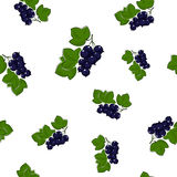 Seamless Pattern of Blackcurrant Stock Photography
