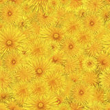 Seamless pattern of blooming dandelions. Stock Photo