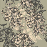 Seamless pattern with blooming phlox, hand-drawing Stock Images