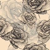 Seamless pattern with blooming roses, hand-drawing Stock Images