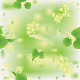 Seamless pattern with blossoming linden Stock Image