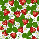 Seamless pattern from blossoming  strawberry. Stock Photo