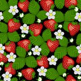 Seamless pattern from blossoming  strawberry. Royalty Free Stock Photo