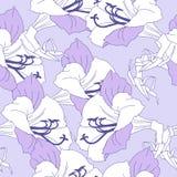 Seamless pattern  with blue amaryllis Stock Photo