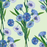 Seamless pattern with blue cornflower Stock Photos