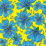 Seamless pattern blue cornflower Stock Images