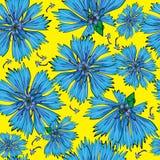 Seamless pattern blue cornflower stock images