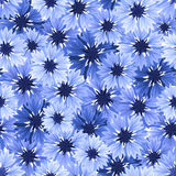 Seamless pattern with blue cornflowers. Vector illustration. Royalty Free Stock Photography