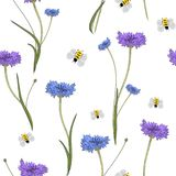 Seamless pattern with blue cornflowers on white. stock images
