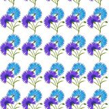 Blue flower cornflower isolated on white background. Cartoon vector centaurea cyanus illustration. Seamless pattern with blue flower cornflower isolated on white Stock Images