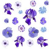Seamless pattern with blue flowers. A collage of blue flowers to use as a background royalty free stock photo