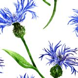 Seamless pattern with blue flowers. Vector seamless pattern with watercolor blue flowers of cornflowers, hand drawn vector background Royalty Free Stock Photo