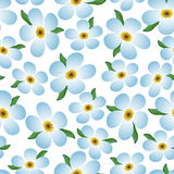A seamless pattern, blue forget-me-nots on a white background. Stock Image