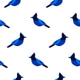 Seamless pattern with blue jay. Ornament for textile and wrapping. Royalty Free Stock Photography