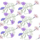 Seamless pattern with blue  pink bindweed Stock Photography